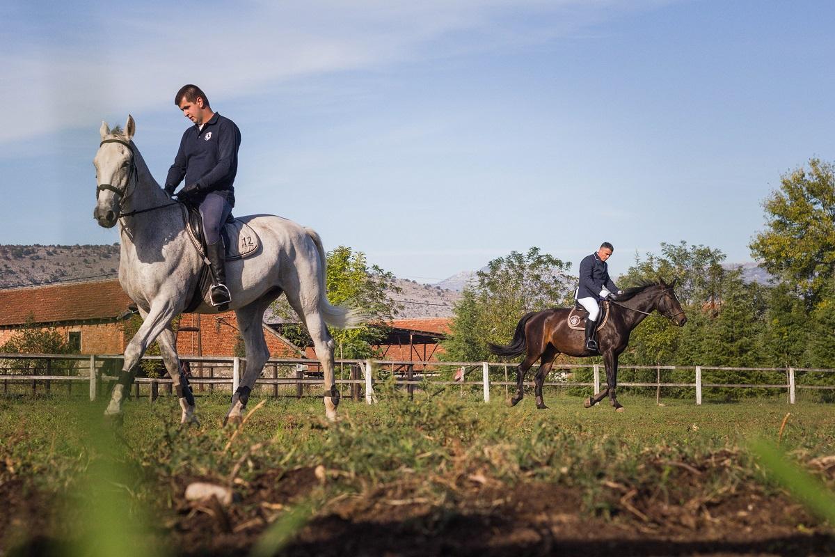 konji2